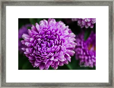 Glowing Purple Framed Print by Syed Aqueel