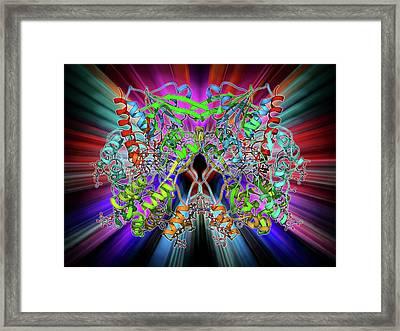 Glycogen Phosphorylase Molecule Framed Print by Laguna Design