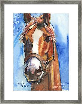 Horse Painting Of California Chrome Go Chrome Framed Print by Maria's Watercolor