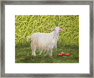 Goat Framed Print by Ditz