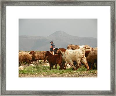 Goat Herder In Jordan Valley Framed Print by Noreen HaCohen