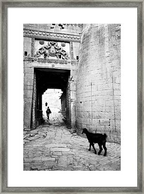 Goat Framed Print by Jagdish Agarwal