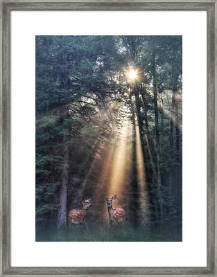God's Creatures Framed Print by Lori Deiter