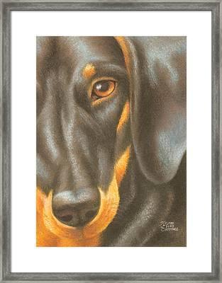Goggie Daschund Framed Print by Karen Coombes