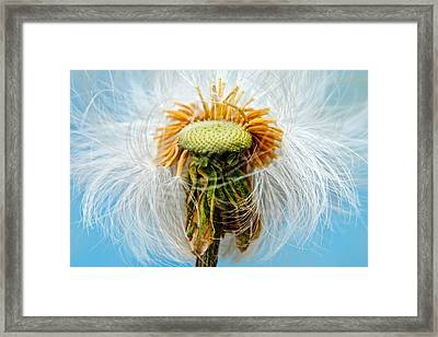 Going Bald Framed Print by Frozen in Time Fine Art Photography