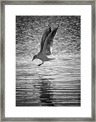 Going Fishing Framed Print by Stelios Kleanthous