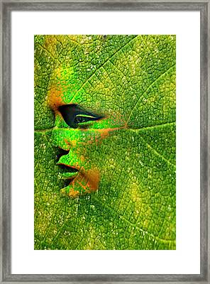 Going Green Framed Print by Diana Angstadt