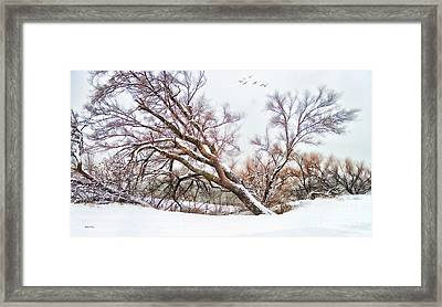 Going Softly Into Winter Framed Print by Betty LaRue