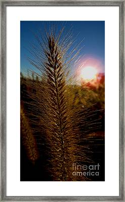 Going To Seed Framed Print by James Aiken