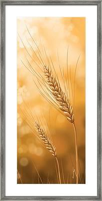 Gold Grain Framed Print by Veronica Minozzi