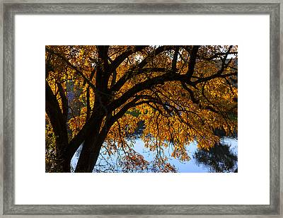 Golden Autumn Leaves Framed Print by Garry Gay