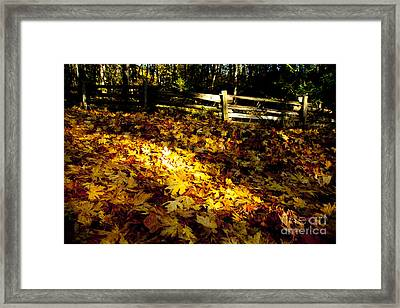 Golden Autumn Leaves Framed Print by Graham Foulkes