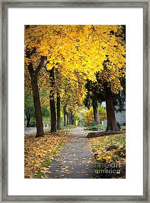 Golden Autumn Sidewalk Framed Print by Carol Groenen