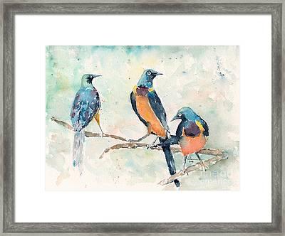 Golden-breasted Starlings Framed Print by Claudia Hafner