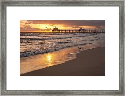 Golden Coast Framed Print by Tuan Le