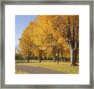 Golden Colors In Autumn Bellavista Park Oregon. Framed Print by Gino Rigucci