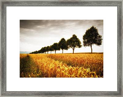 Golden Cornfield And Row Of Trees Framed Print by Matthias Hauser