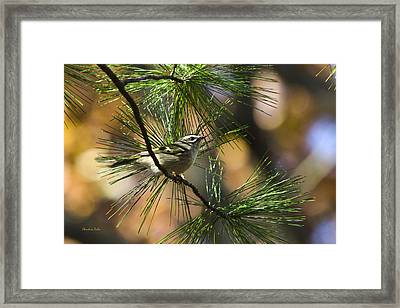 Golden-crowned Kinglet Framed Print by Christina Rollo