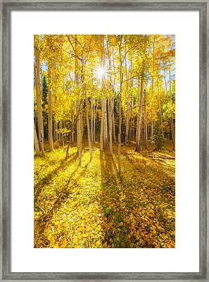 Golden Framed Print by Darren  White