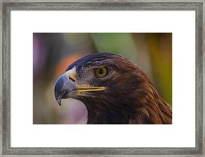 Golden Eagle Framed Print by Garry Gay