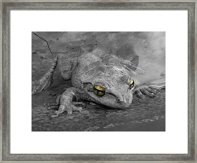 Golden Eyes Framed Print by Chasity Johnson