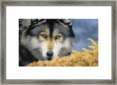 Golden Eyes Framed Print by Lucie Bilodeau
