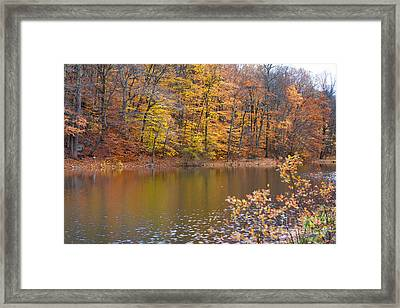 Golden Glory Framed Print by A New Focus Photography