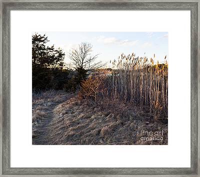 Golden Glow Framed Print by Michelle Wiarda