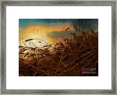 Golden Grain Framed Print by R Kyllo