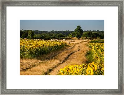 Golden Hour On Country Road Framed Print by Davorin Mance