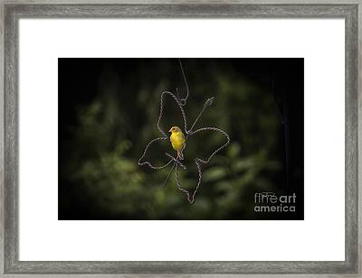 Golden Hour Part 2 Framed Print by Cris Hayes