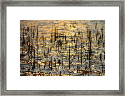 Golden Lake Ripples Framed Print by James BO  Insogna