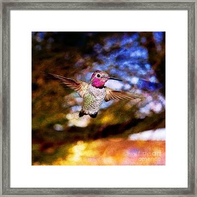 Golden Light Hummingbird Flight Framed Print by Jeanette Brown