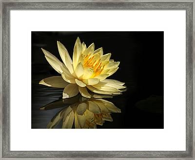 Golden Lotus Framed Print by Carol Eade