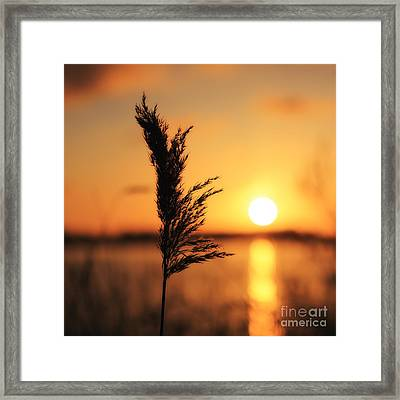 Golden Morning Framed Print by LHJB Photography