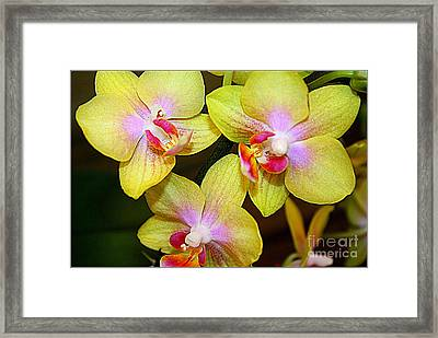 Golden Orchids Framed Print by Dora Sofia Caputo Photographic Art and Design