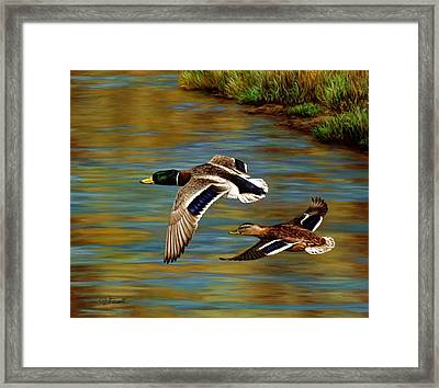 Golden Pond Framed Print by Crista Forest