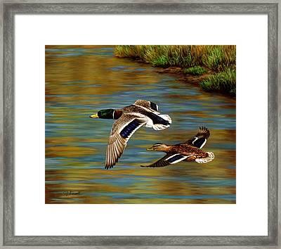 Golden Pond Framed Print by Crista Forest