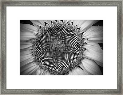 Golden Ratio In Black And White Framed Print by Jodi Pflepsen