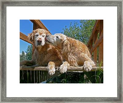 Golden Retriever Dogs The Kiss Framed Print by Jennie Marie Schell