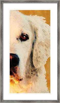 Golden Retriever Half Face By Sharon Cummings Framed Print by Sharon Cummings
