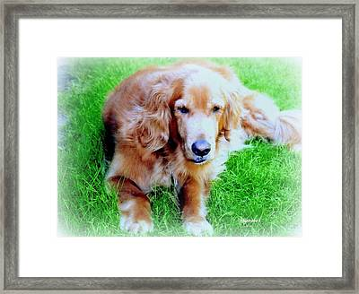 Golden Retriever Framed Print by Kay Novy