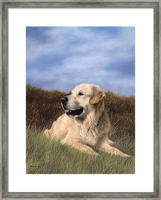 Golden Retriever Painting Framed Print by Rachel Stribbling