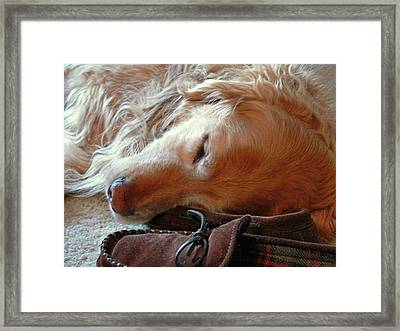 Golden Retriever Sleeping With Dad's Slippers Framed Print by Jennie Marie Schell