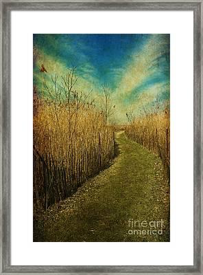 Golden Summer Days... Framed Print by Nina Stavlund