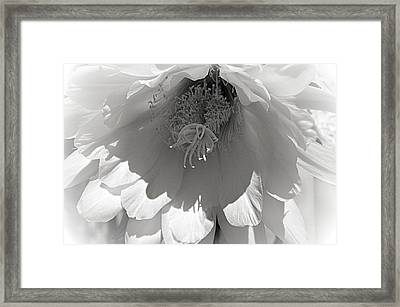 Golden Torch Cactus 3 Framed Print by Cindy Nunn