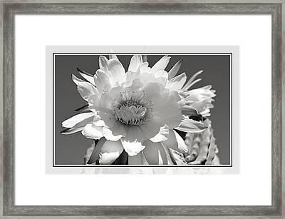 Golden Torch Cactus 5 Framed Print by Cindy Nunn