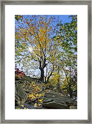Golden Tree Framed Print by Christina Rollo