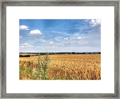 Golden Wheat Fields Framed Print by Gill Billington