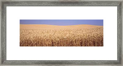 Golden Wheat In A Field, Palouse Framed Print by Panoramic Images